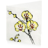 Lemon Orchid